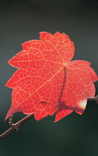 秋葉唯美手機風景壁紙