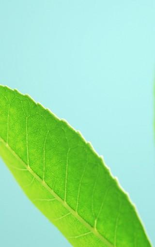 绿色护眼主题手机壁纸