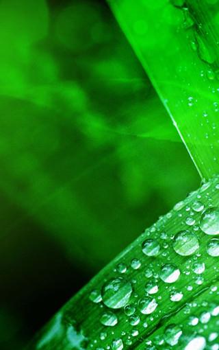 植物清新护眼手机壁纸
