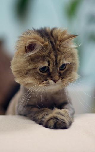 可爱动物手机壁纸桌面下载