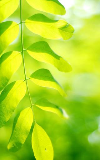绿色护眼唯美壁纸图片