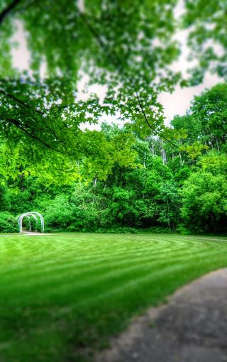 绿色自然护眼手机壁纸图片