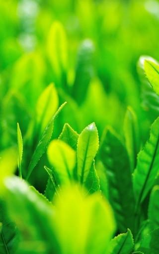 绿色护眼手机图片壁纸
