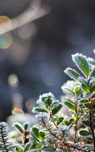 春天的植物景色壁纸图片 第3页-zol手机壁纸