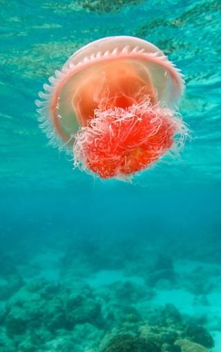 海底世界水母iphone手机壁纸