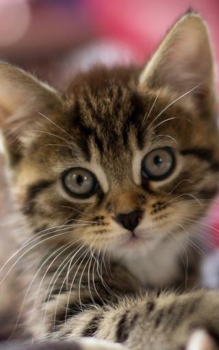 可爱萌猫高清手机壁纸