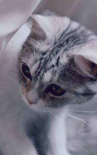 可爱萌动物手机壁纸