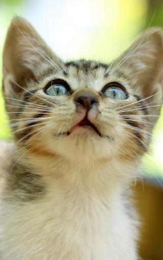 壁纸 动物 猫 猫咪 小猫 桌面 320_509 竖版 竖屏 手机