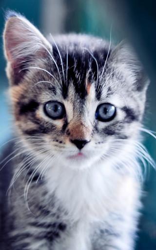 可爱猫咪桌面壁纸大全,可爱猫咪桌面壁纸大图_萌猫咪桌面壁纸大图