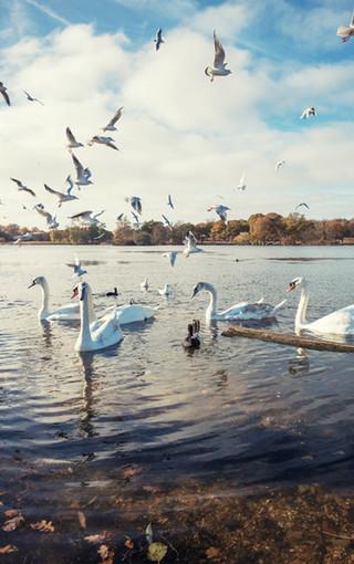 手机壁纸下载免费风景动物泊洋