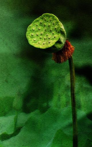 简约植物大图壁纸图片 第2页-zol手机壁纸