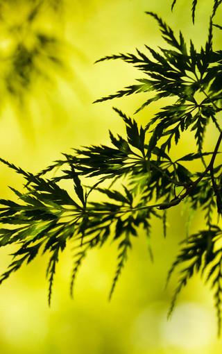 简约植物大图壁纸图片 第7页-zol手机壁纸