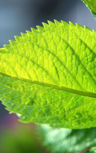 高清自然植物手机壁纸