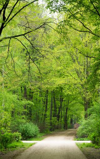 绿色自然护眼手机壁纸