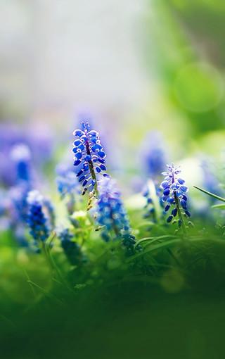 夏天清新植物手机壁纸