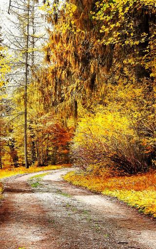 清爽自然景色高清手机壁纸图片