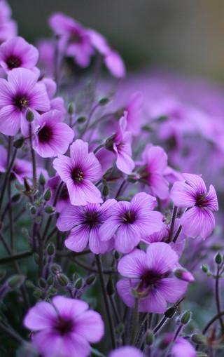 高清植物唯美手机壁纸图片
