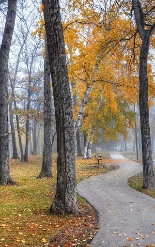 风景壁纸 自然风景壁纸 高清森林唯美景色壁纸图片   (5/11) 112 下载