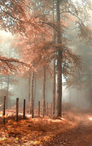 高清森林唯美景色壁纸图片 第3页-zol手机壁纸