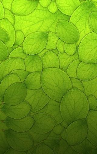 护眼植物手机壁纸桌面