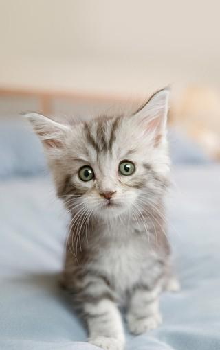 大图猫咪手机壁纸桌面