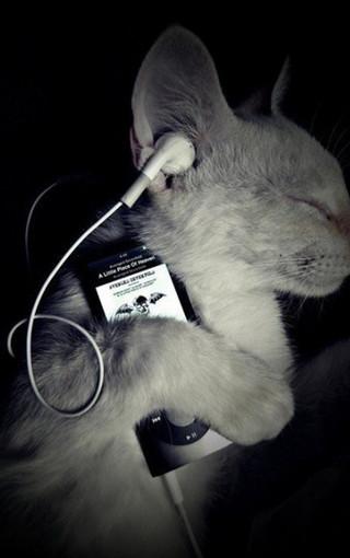 可爱猫咪大图壁纸桌面 第3页-zol手机壁纸