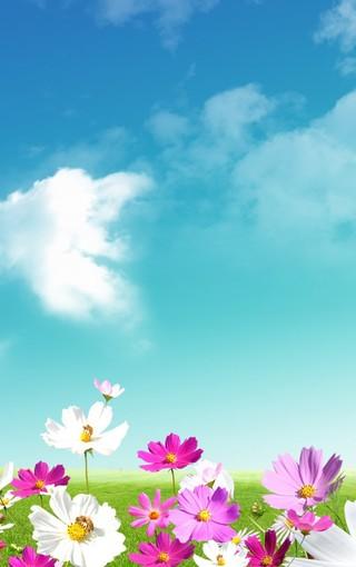 唯美自然小花手机壁纸