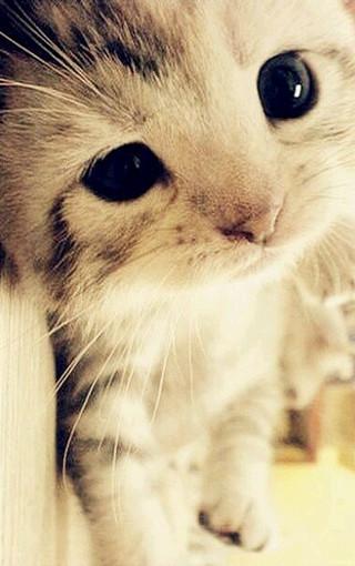 高清萌猫手机壁纸图片