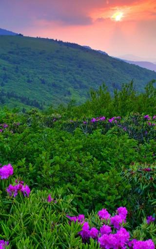 植物风景手机壁纸下载