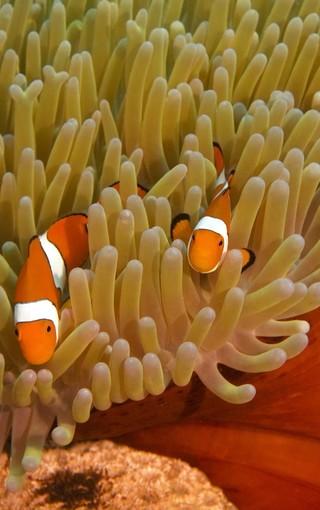 海底世界高清壁紙圖片