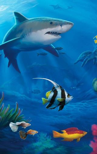 海底世界高清壁紙圖片 第3頁-zol手機壁紙