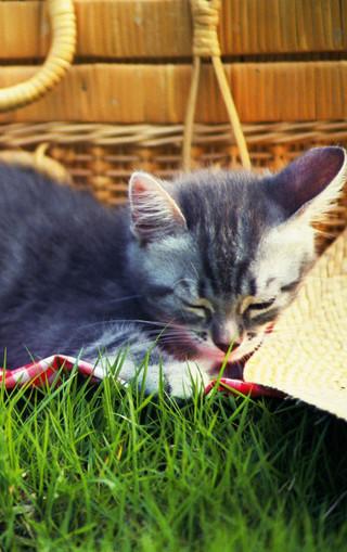 可爱壁纸 萌猫宽屏手机壁纸下载