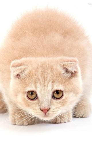 萌猫宽屏手机壁纸下载