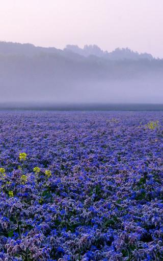 风景壁纸 唯美风景壁纸 雾中美景手机壁纸桌面   zol手机壁纸有部分