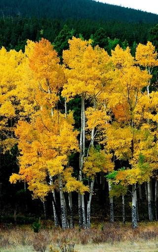手機自然風景美圖壁紙