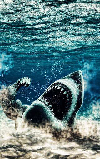 壁纸 动物 海洋动物 桌面 320_510 竖版 竖屏 手机