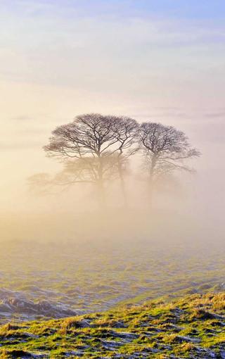 冬季唯美雾境手机壁纸