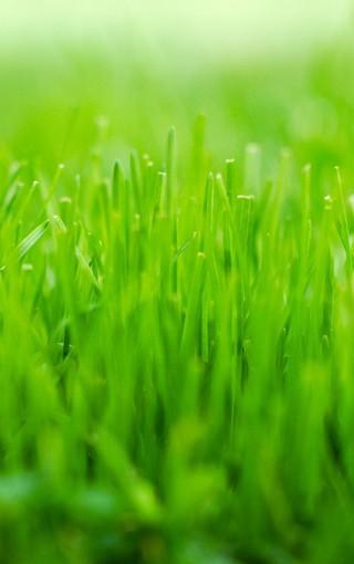背景 壁纸 绿色 绿叶 树叶 植物 桌面 320_510 竖版 竖屏 手机