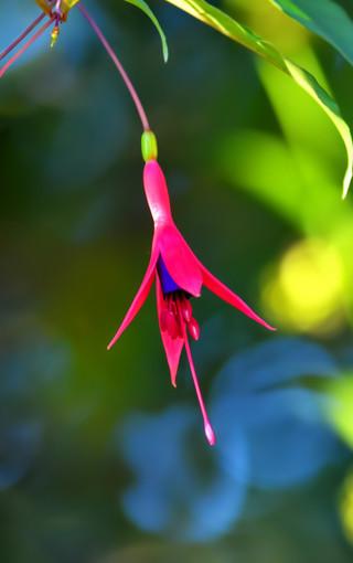 花卉植物高清美景壁纸 第9页-zol手机壁纸