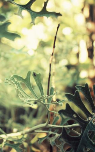 风景壁纸 自然风景壁纸 超大自然景色手机壁纸
