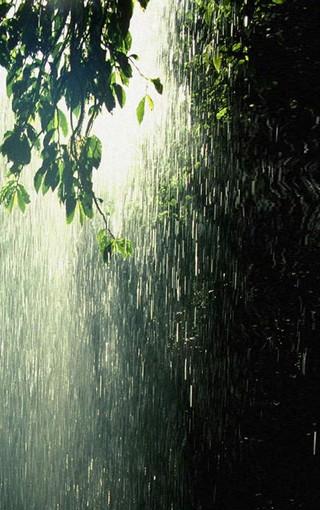雨中风景高清手机壁纸
