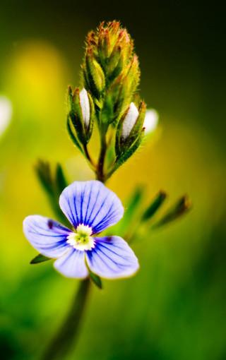 微距植物唯美手机壁纸