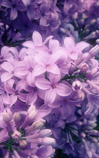 风景壁纸 花朵壁纸 花卉自然手机壁纸   zol手机壁纸有部分资源来源于