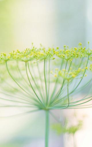 清新植物手机壁纸图片
