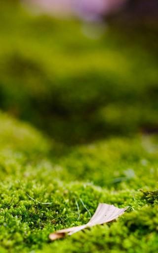 绿色护眼手机壁纸-zol手机壁纸