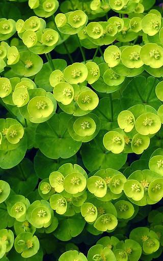 护眼绿色手机壁纸-zol手机壁纸