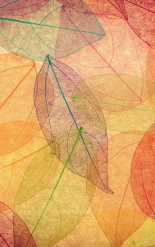 树叶创意纹理手机壁纸