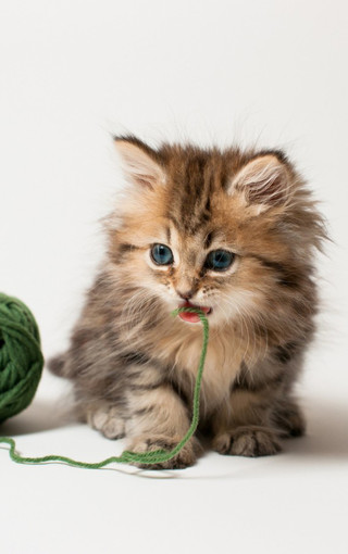 可爱壁纸 手机萌猫宽屏壁纸桌面