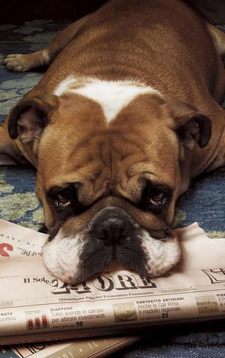 动物高清可爱手机壁纸