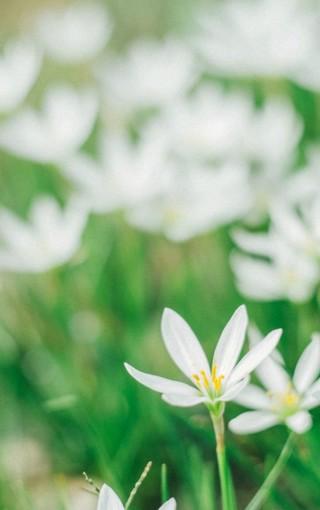 绿色小花可爱手机壁纸